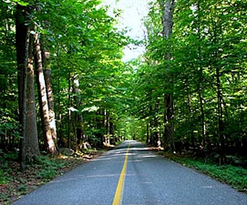 Grassy_Hill_Road