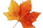 fall-leaf-carlos-caetano
