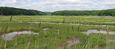 Bridebrook Salt Marsh